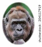 unusual face portrait of a... | Shutterstock .eps vector #204117919