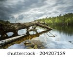 old tree in north poland... | Shutterstock . vector #204207139