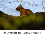 Squirrel Is Standing On A Thick ...