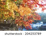 the autumn leaves of koarashi... | Shutterstock . vector #204253789