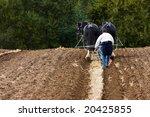 suffolk punch plough horses...