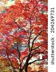 The Autumn Leaves Of Koarashi...