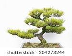 an image of bonsai | Shutterstock . vector #204273244