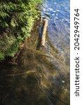 Clean Fresh Water In A Lake...