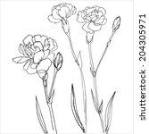 set of grass narisovyh black... | Shutterstock .eps vector #204305971