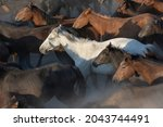 A Herd Of Colorful Horses ...