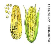 corn vegetables drawing with... | Shutterstock . vector #2044075991