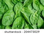 Fresh Green Baby Spinach Leaves