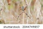 Macro Photo Female Spider...