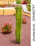 Green Tall Cactus Plant And...