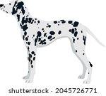 dalmatian dog breed vector pet    Shutterstock .eps vector #2045726771