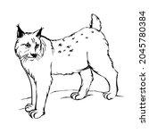 lynx outline wild mammal and...   Shutterstock .eps vector #2045780384