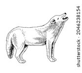 white arctic wolf hand drawn... | Shutterstock .eps vector #2046238154