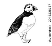 hand drawn atlantic puffin bird. | Shutterstock .eps vector #2046238157