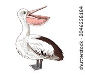 hand drawn pelican isolated on... | Shutterstock .eps vector #2046238184