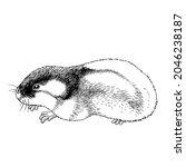 hand draw illustration of polar ... | Shutterstock .eps vector #2046238187