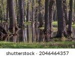 A Pretty Wooded Park Has Flood...