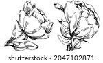 peony flower. floral botanical... | Shutterstock .eps vector #2047102871
