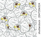orchid flower sketch....   Shutterstock .eps vector #2047206524