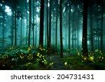 Stock photo firefly 204731431