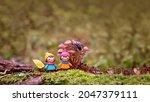 Cute Mini Dolls And Mushrooms...