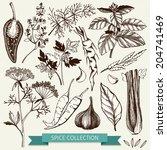 vector set of ink hand drawn... | Shutterstock .eps vector #204741469