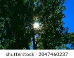 Sun Rays Behind Tree Green...