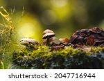 Mushrooms On Thin Legs With...