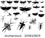 illustration with insect... | Shutterstock .eps vector #204810829