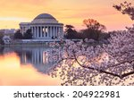 Cherry Trees Bloom In Spring I...