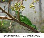 Vibrant Green Iguana In Palm...