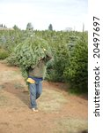 cut your own christmas tree lot ... | Shutterstock . vector #20497697