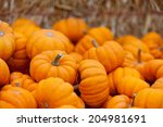 Pile Of Small Cute Pumpkins At...