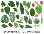 set of tropical leaves isolated ... | Shutterstock . vector #2049989501