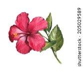 watercolor hibiscus flower... | Shutterstock . vector #205029589