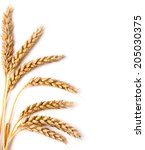 wheat ears isolated on the... | Shutterstock . vector #205030375