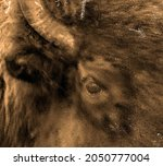 Psychedelic Buffalo Background...
