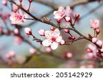 The Fruits Blossom In Spring