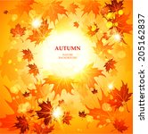 bright autumn background with... | Shutterstock .eps vector #205162837
