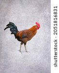 Colorful Rooster On Gray Grunge ...