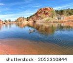 Canadian Goose Swimming In Lake