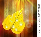 autumn leaf template with water ... | Shutterstock .eps vector #205239709