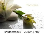 freshness white lily with  bud... | Shutterstock . vector #205246789