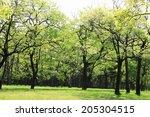 an image of verdure   Shutterstock . vector #205304515