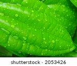 water droplets dew on leaf... | Shutterstock . vector #2053426