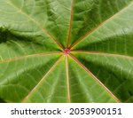 Green Uniformly Wavy Surface Of ...
