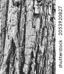 distress old dry wooden texture....   Shutterstock .eps vector #2053920827