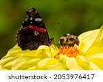 Bumblebee And Butterfly Collect ...