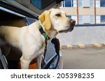 Police Sniffer Dog During A...
