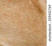 fur animal   Shutterstock . vector #205431769